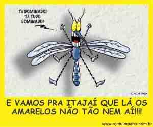 dengue jandir bellini
